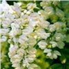 100% Natural Sophora Japonica Extract Troxerutin Powder,Troxerutin
