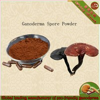 china supplier red reishi mushroom extract powder