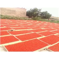 new arrival goji berry, best wolfberry, good quality goji berry