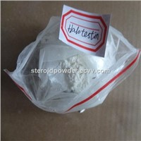 Halotestin Anabolic Androgenic Steroids for Muscle Building