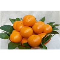 Early Mandarin Orange in chinese for wholesale 03