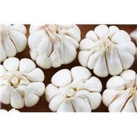 Fresh garlic, white garlic