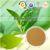 Natural Green Tea Extract 90% Tea Polyphenols