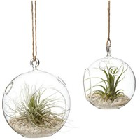 Creative Hanging Glass Terrarium Vase and Candle Holder Glass Globe with one open and 2 small holes