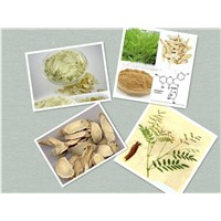 Dried Astragalus root powder ,Crude Astragalus root powder