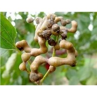 100% Pure Natural Japanese Raisin Tree Seed Extract 5:1 10:1 20:1