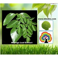 High quality pure natural Moringa leaf powder3%-4%
