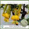 Herbal medicine extract manufacturer supply isoflavones genistein phytoestrogens
