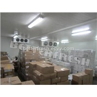 Dongguan Betterfresh refrigeration preservation vegetable Storage Cold Store Cold room
