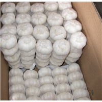 Pure White Garlic Available for sale