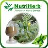 Natural Tribulus terrestris extract