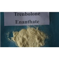 Injection Finished Steroids Oil 200mg/Ml Trenbolone Enanthate for Muscle Building