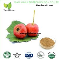 hawthorn berry extract,natural hawthorn extract,hawthorn leaf extract
