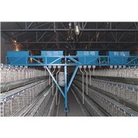 Automatic Poultry Farming Equipment System for Chicken