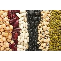 Best Quality Kidney Beans from South Africa