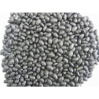 Small black kidney beans