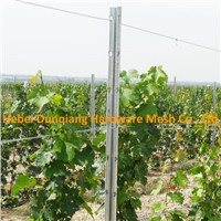 Zinc Coating Galvanized Metal Vineyard Grape Trellis Post