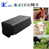 Non-rechargeable Special Battery GEO Fence Alarm Sheep GPS Tacker With Free Collar