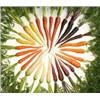 High quality Carrot Extract Price/Beta Carotene Powder