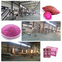purple sweet potato processing line