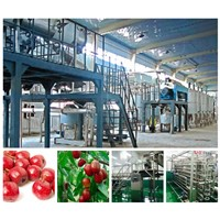 Date jujube hawthorn and similar fruit processing line