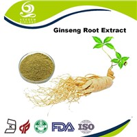 Panax Ginseng Root Extract Ginsenosides 7% Powder