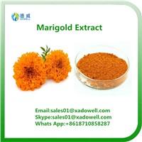 Marigold Extract Lutein 5%-90%