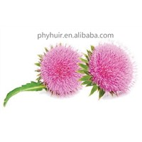 UV 80% Silymarin HUIR Pure Natural Milk Thistle Extract