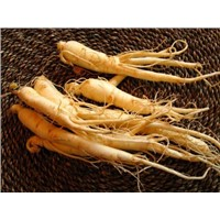 Top Quality Panax Ginseng Root Extract 7%