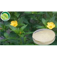 Damiana Extract, Natural Male Enhancement Herbs, Sex Medicine Damiana Leaf Extract/Proanthocyanidins/Turnera Diffusa