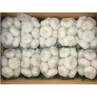 Fresh White Garlic from Thailand