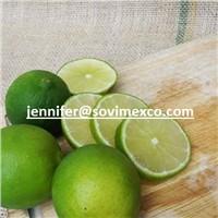 Vietnam Fresh Lemon