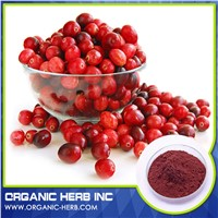 Cranberry Seed Extract 10:1   Cranberry Plants Extract 10%
