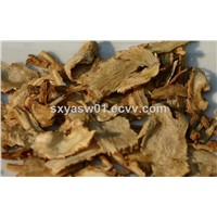 Natural Regulate Female Hormones Angelica / Dong Quai / Dang Gui Extract