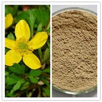 Natural Harpagoside Immune Regulation Devil's Claw Extract