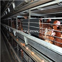 Automatic Chicken Breeding Cage/Poultry Farm House Equipment