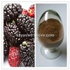 Natural Mulberry Berry / Fruit Extract with Anthocyanidins