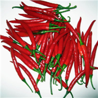 Red Chilli Pepper Seeds from Hebei Shuangxing Seed Co., Ltd SXP No. 9