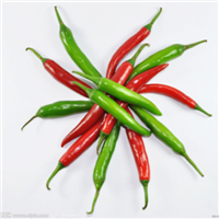 Late Maturity F1 Hybrid Red Chilli Pepper Seeds SXP No. 14