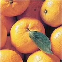 supply Mandarin Orange