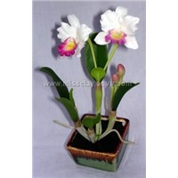 Medium small Cattleya