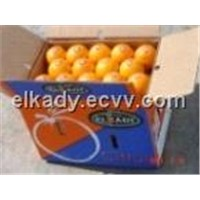 Fresh Egyptian Orange from ELKADY