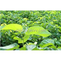 Mulberry Leaf Extract-DNJ