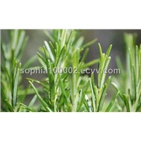Rosemary antioxidant (fat-soluble)