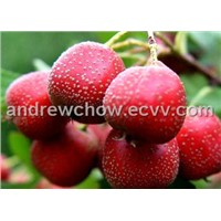 Hawthorn Berry Extract (Flavones 2.0%)