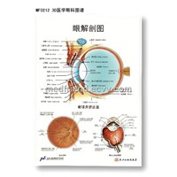 3D Medical Anatomical PVC Chart - Eye