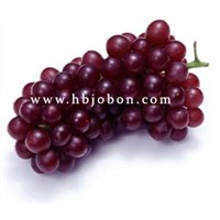 Grape Seed Extract, OPC 95% HPLC