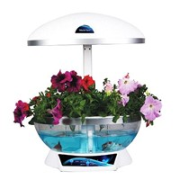 concept product ! as a creative table lamp mini fish tank hydroponics as holiday birthday gifts