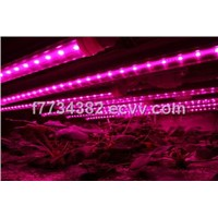T8 LED Grow Light Tube