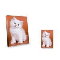 Kitten on orange backgroud canvas art